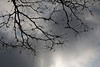 Bare limbs and twigs of a honey locust tree against an overcast sky.<br /> <br /> Ypsilanti, Michigan<br /> September 29, 2011