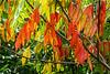 Apricot, Pumpkin, Orange Marmalade ... The Colors of Autumn