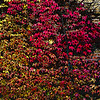 Ivy spectrum - filtered version