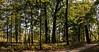 Mixed hardwood forest, photomerge