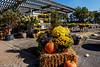 Garden Center with fall stock