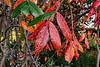 Approaching autumn (sc 9/21/18)