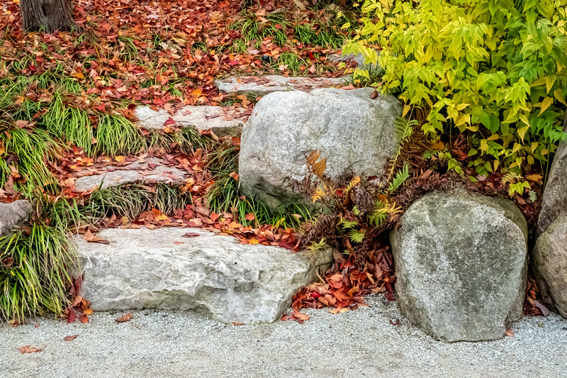 Boulders and steps up the hill, adorned with maple leaves