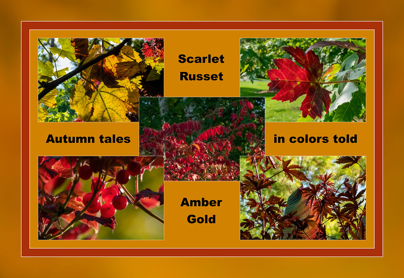 Autumn colors for the first day of fall