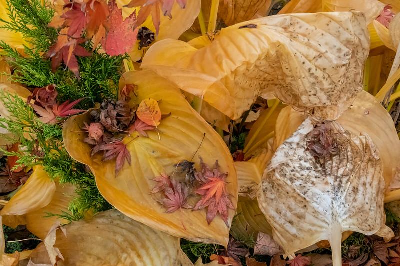 D301-2019<br /> <br /> Frederik Meijer Gardens, Grand Rapids, Michigan<br /> Taken October 28, 2019