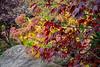 Autumn's complex canvas