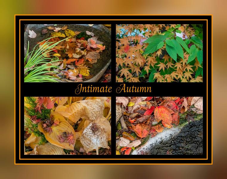 Intimate Autumn Scenes