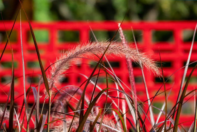 An inverted smile (not a frown) of ornamental grass