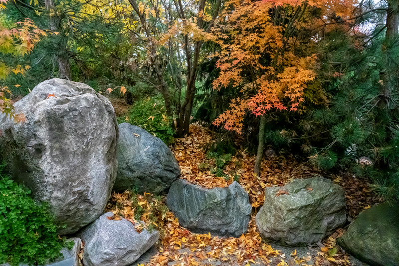 Garden niche with Japanese maple and boulders