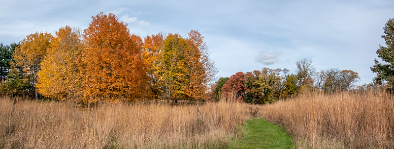 Autumn scene on a meadow trail