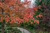 Black tupelo tree in fall