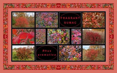 Fall Primer:  Rhus aromatica, fragrant sumac