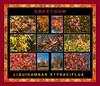 Fall primer:  Liquidambar styraciflua, Sweetgum