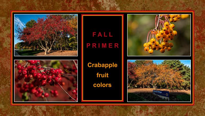 Fall primer:  Malus sp. crabapple colors