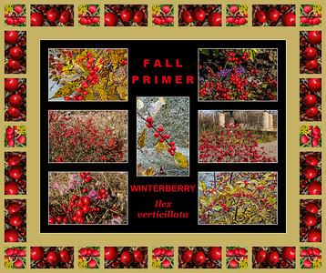 Fall primer:  Ilex verticillata, Winterberry