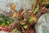 Ferns and fallen leaves