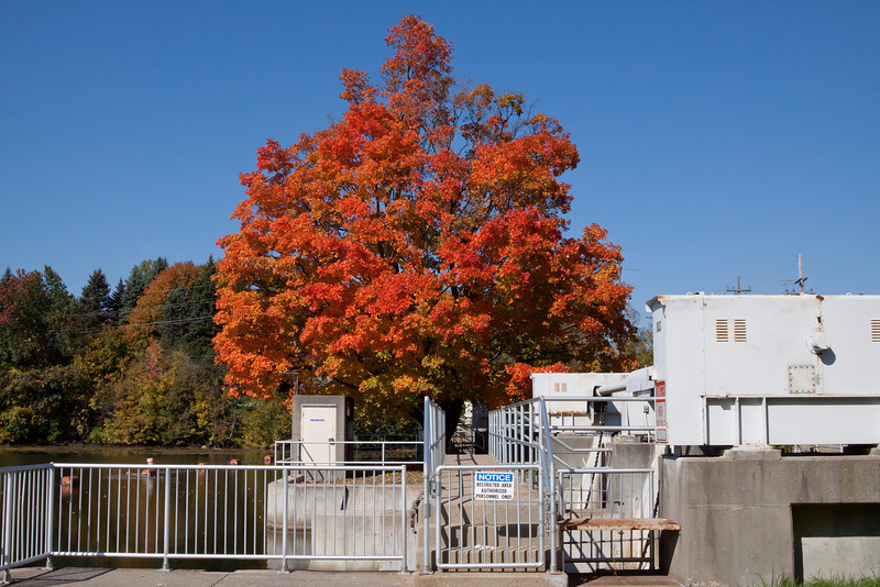 Isolated sugar maple between two flood gates at Geddes Dam