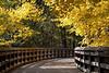 Wildwood Preserve Metro Park boardwalk in autumn