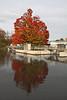 Sentinel maple tree at Geddes Dam