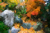 Filtered version:  Garden niche with Japanese maple and boulders