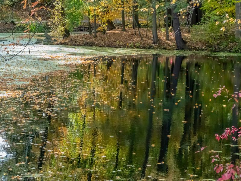 Pond scene in fall