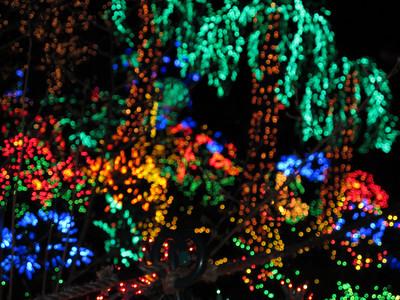 Garden d'Lights in Bellevue