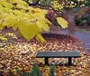 Fall (2005) in Seattle Arboretum.<br /> <br /> Jesien (2005) w arboretum w Seattle.