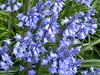 Flowers in Seattle Arboretum.<br /> <br /> Kwiaty w arboretum w Seattle.