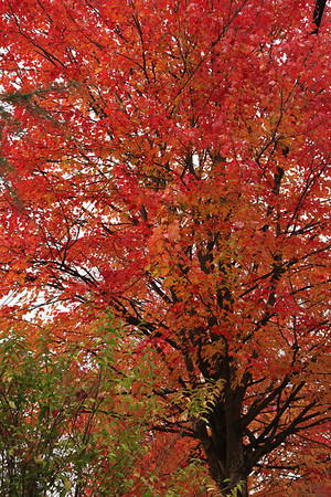 Seattle-Fall-20121017-07-3