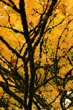 Seattle-Fall-20121028-19-2
