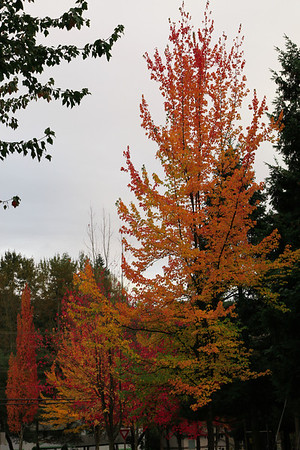Seattle-Fall-20121017-02-1