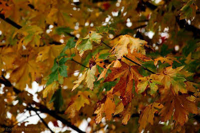 Seattle-Fall-20121031-02-2