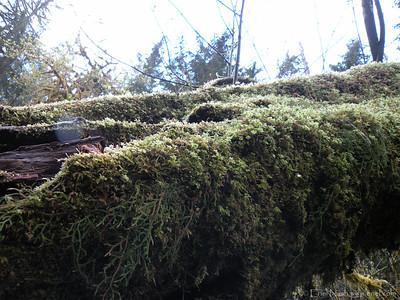 HohRainForest-20120507-150-52