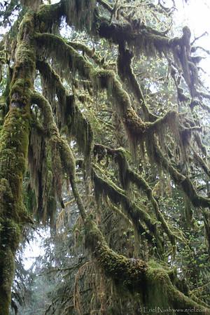 HohRainForest-20120506-082-10