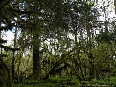 HohRainForest-20120507-107-59