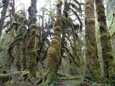 HohRainForest-20120507-160-49