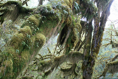 HohRainForest-20120506-071_1-16