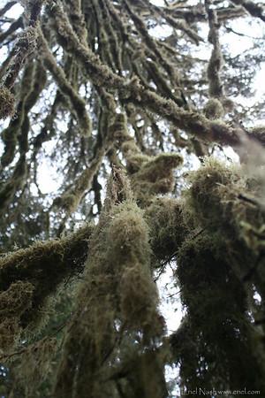 HohRainForest-20120506-045-34