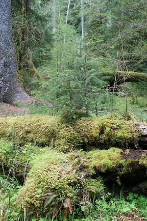 HohRainForest-20120506-018-41