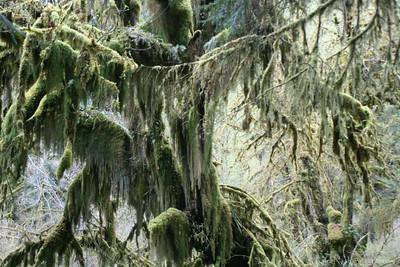 HohRainForest-20120506-050-31