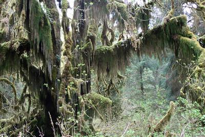 HohRainForest-20120506-055_1-25