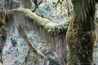HohRainForest-20120509-101-26