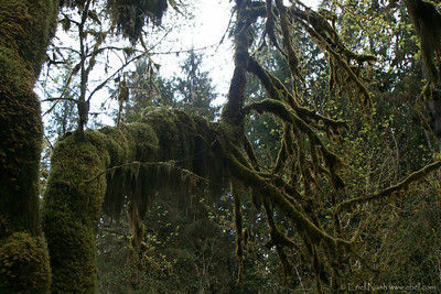 HohRainForest-20120506-065-19