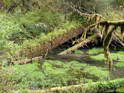HohRainForest-20120507-117-56