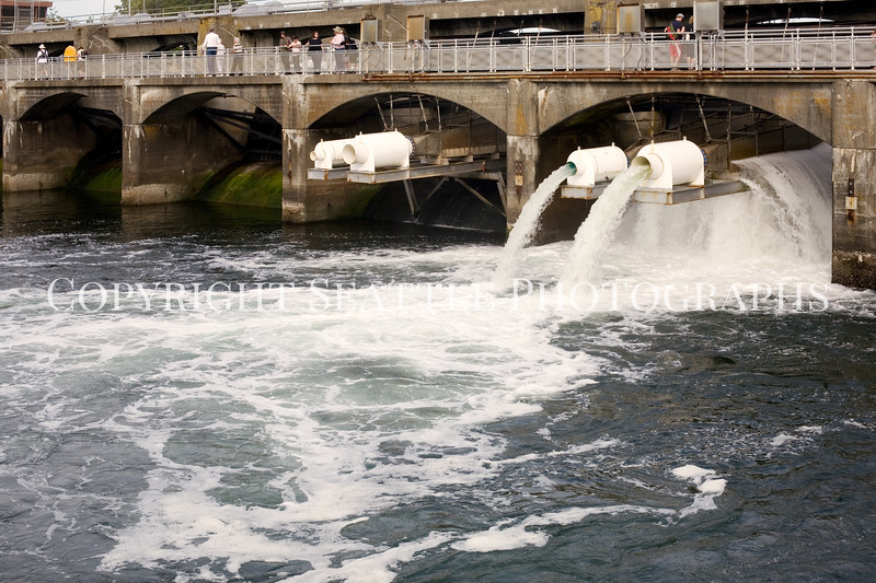 Ballard Locks Spillway 106