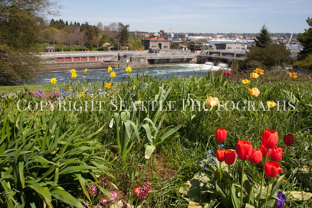 Ballard Locks Flowers 103
