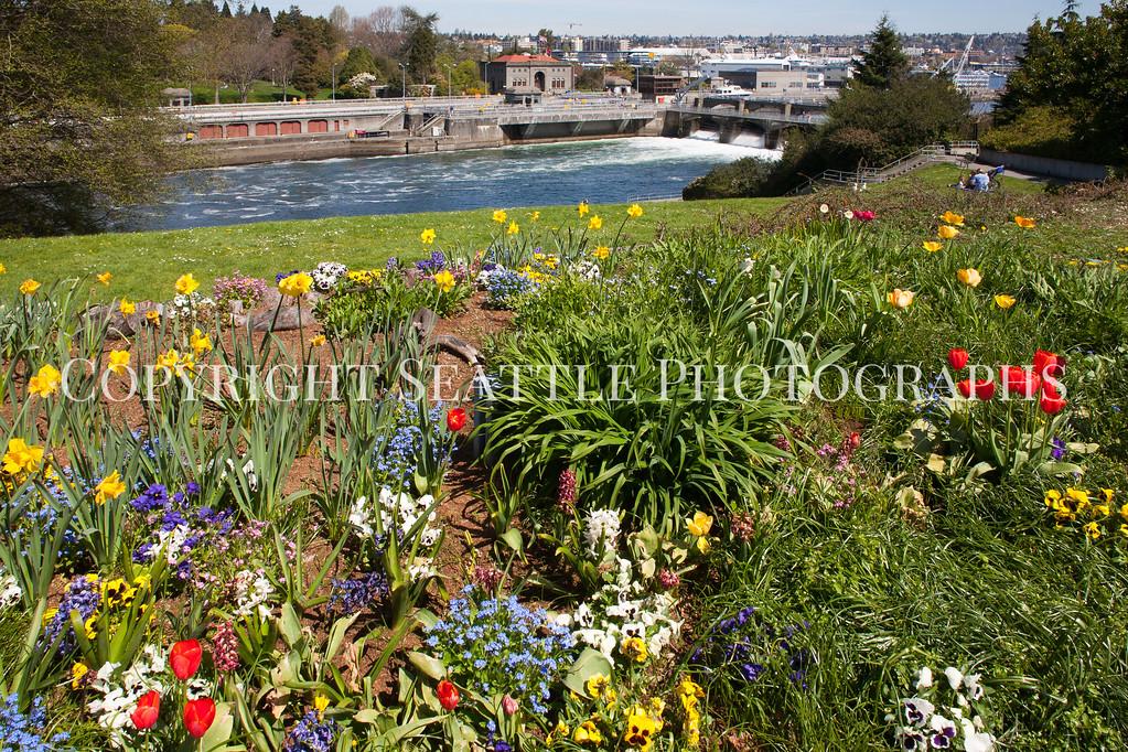 Ballard Locks Flowers 100