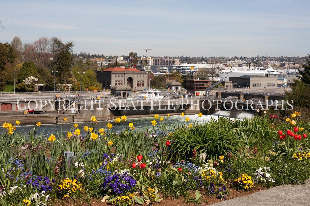 Ballard Locks Flowers 106