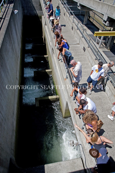 Ballard Locks Fish Ladder 107