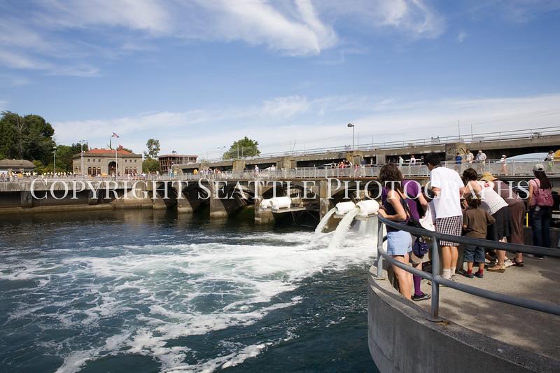 Ballard Locks Spillway 101